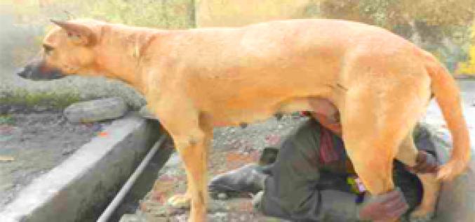 വിശപ്പു മാറ്റാന് 6 വയസ്സുകാരന് പട്ടിയുടെ പാലു കുടിക്കുന്നു